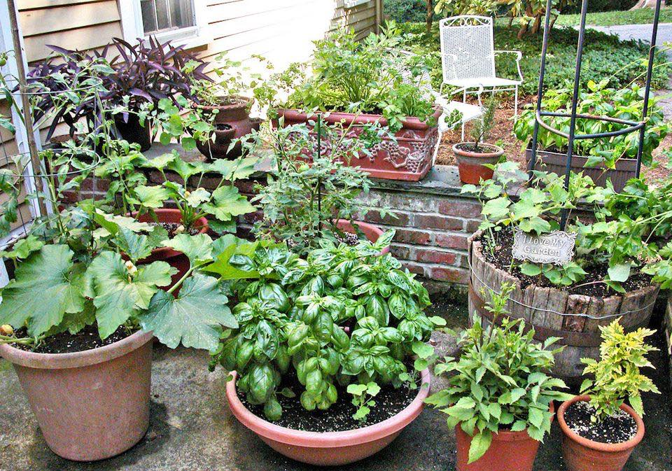 Who Needs Space? Your Best Garden Ever in Containers